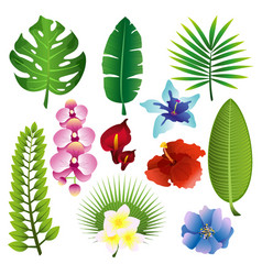 Set of colorful tropical vector