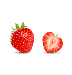 strawberry and half isolated on white vector image