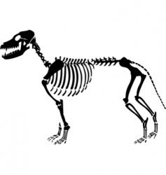 Dog skeleton vector
