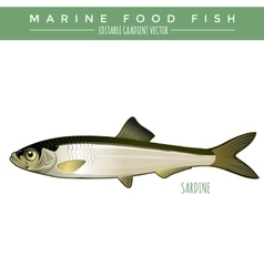 Sardine marine food fish vector