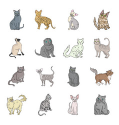 cat breeds set icons in cartoon style big vector image