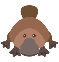 cute platypus on white background vector image