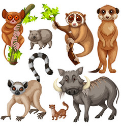 Different types of wild animals on white vector