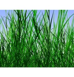 Grass jungle vector