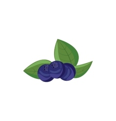 Ripe bilberries with green leaves icon vector