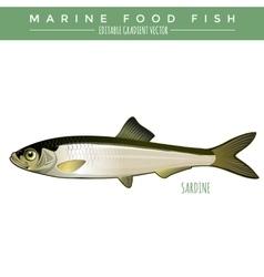 Sardine marine food fish vector