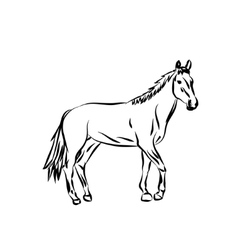 silhouette Cartoon horse vector image