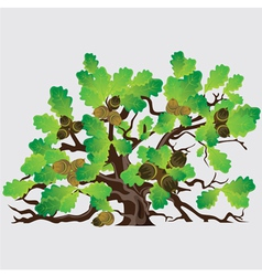 Big green oak tree with acorns vector
