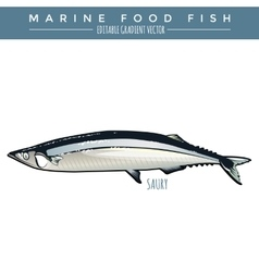 Saury marine food fish vector