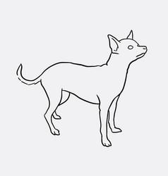 Chihuahua pet dog sketches vector