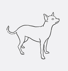 chihuahua pet dog sketches vector image vector image