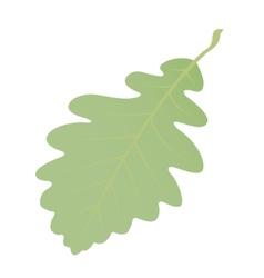 Green oak leaf on white background vector image