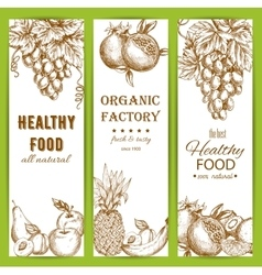 Healthy natural organic fruit food sketch banners vector image