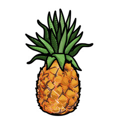 pineapple tropical exotic fruit tasty vector image