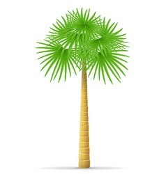 Palm tree 10 vector