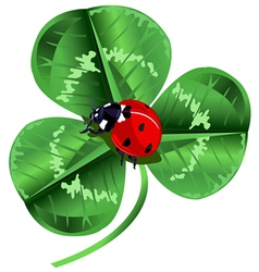 St patrick day three leafed clover and ladybug vector
