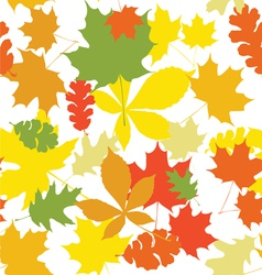 Seamless autumn leaves white vector