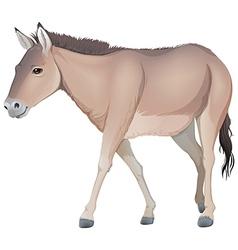A donkey vector