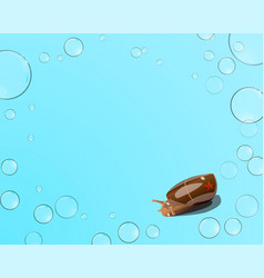 starfish and snail bubbles on a blue background vector image vector image