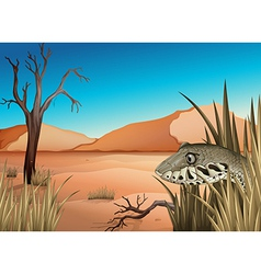 A reptile in the dessert vector