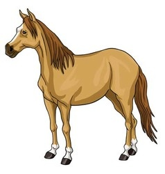 Brown horse white head vector