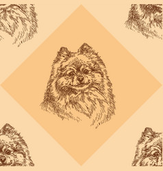 seamless pattern with small pomeranian on orange vector image vector image