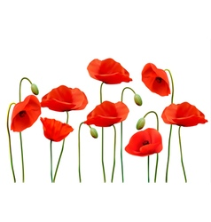 Nature summer background with red poppies vector