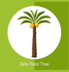 Date palm tree of exotic tropical vector