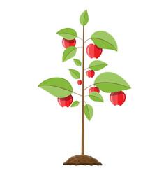 decorative fruit tree vector image vector image