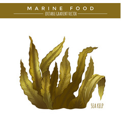 Sea kelp marine food vector