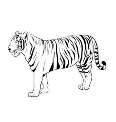 tiger drawing vector image vector image