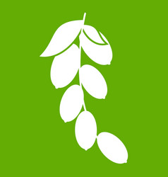 Branch of cornel or dogwood berries icon green vector