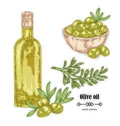 hand drawn olive branch and olive oil in glass vector image vector image