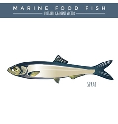 Sprat marine food fish vector
