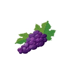 Bunch of blue grapes icon cartoon style vector image vector image