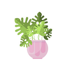 Philodendron house plant indoor flower in pot vector