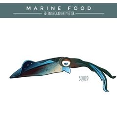 Squid marine food fish vector