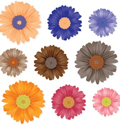 Gerbera flowers set vector image