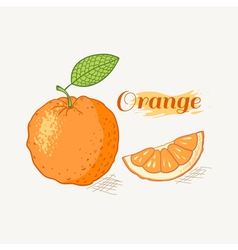 Hand drawn orange vector