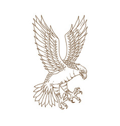 Osprey swooping drawing vector