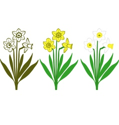 Daffodils vector