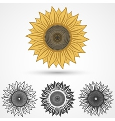 sunflower icon vector image