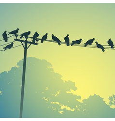 Birds on a lines vector