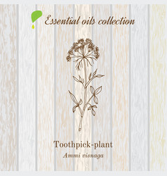 Pure essential oil collection toothpeak-plant vector