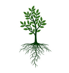 green tree with leafs and roots vector image