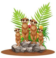 Four meerkats standing on stone vector