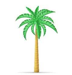 Palm tree 11 vector