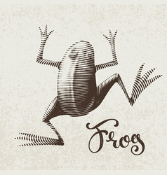 frog painted in engraving style eps8 rgb vector image
