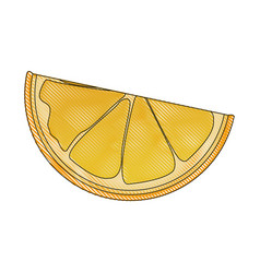 Drawing slice orange citrus fruit harvest vector