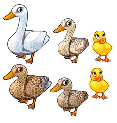 Maturation stages of duck three stages of growth vector